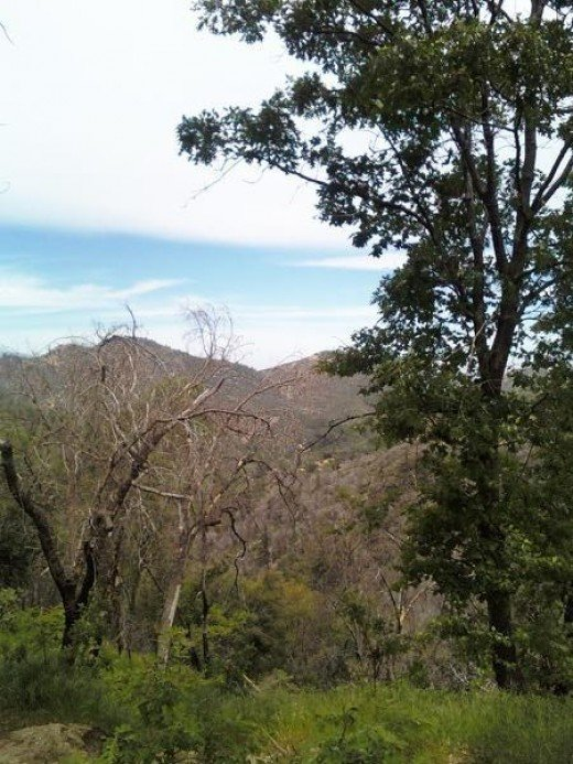 Here is a picture I took of the San Bernardino Mountains with my cell phone on a walk.