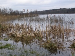From the water's edge, Whitlingham Country Park