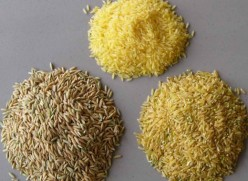How rice is grown -different types of rice.