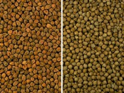 Cultivating and Using Chickpeas, or Garbanzo Beans