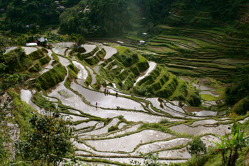 Banaue Rice Terraces (Photo courtesy by jonrawlinson from Flickr.com)
