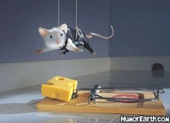 Do Mice Eat Cheese?