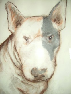 Owning an English bull terrier