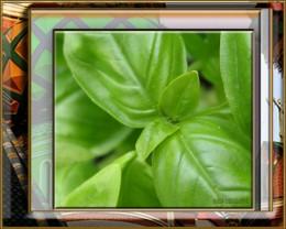 Basil leaf up close design