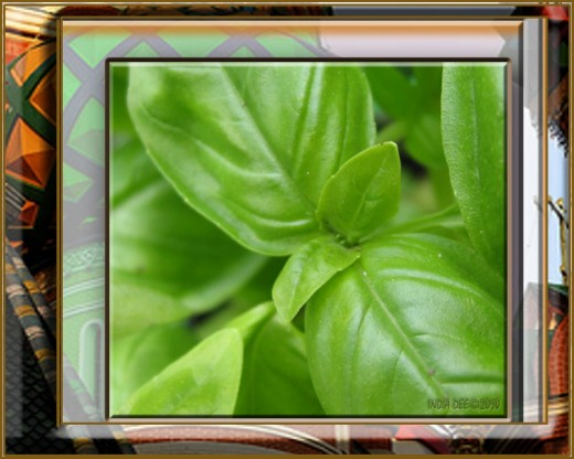 Basil leaf up close design