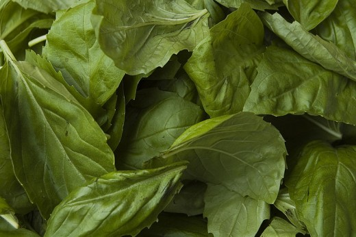 Basil by Paul Goyette on wikimedia commons