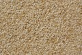 Sesame seeds in public domain