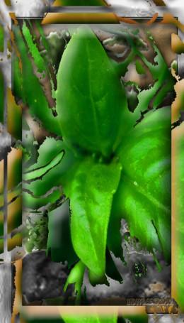 Abstract Basil Plant