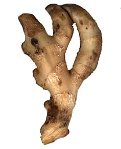 ginger widely used in cooking especially in sweets & beverages flavour is peppey and sleightly sweet.
