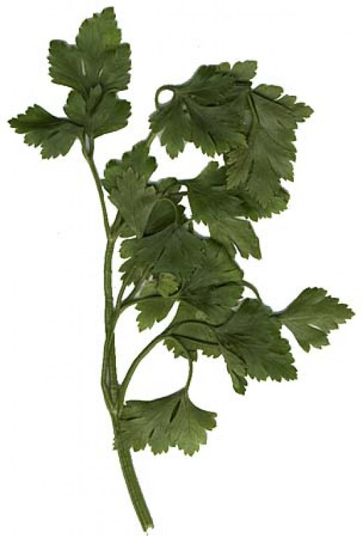 Parsley ; Italian cooks love this easy-to-grow herb and use it generously in their sauces. In Italy this plant is a symbol of love; a sprig of it presented to your lover bespeaks fidelity. When a woman puts a pot of basil on the balcony outside her r