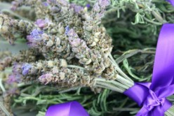 Cooking With Lavender Tips