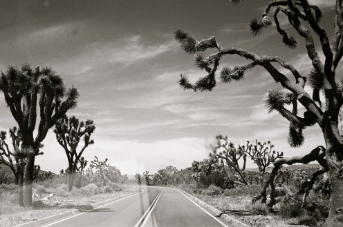 Driving through a Joshua Tree forest