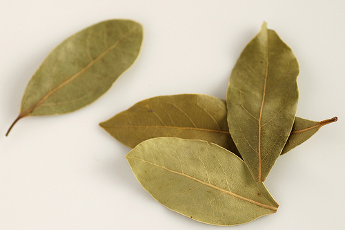 Dried Bay Leaves (Photo courtesy by little blue hen from Flickr.com)