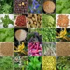 Herbs and Spices as Essential Ingredients in Foods