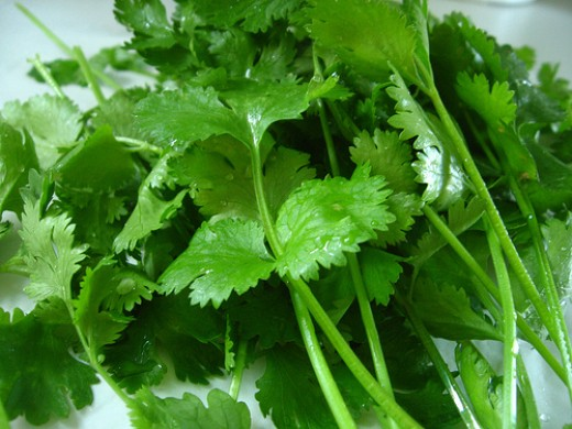 Cilantro (Photo courtesy by Qfamily from Flickr.com)