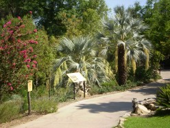 The beautiful botanical landscaping found throughout San Diego Zoo and Safari Park.