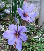 Photo Courtesy from faeriesfinest.com/D289.html