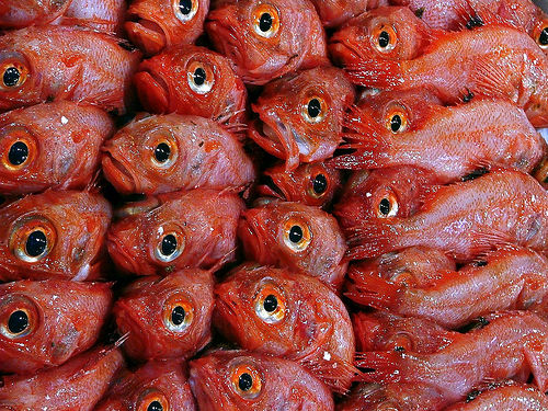 Fresh seafood at a Japanese fish market photo: cranrob @flickr