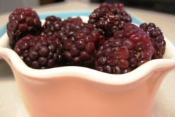 Blackberries. Photo by MDJ Crumm, 2010.