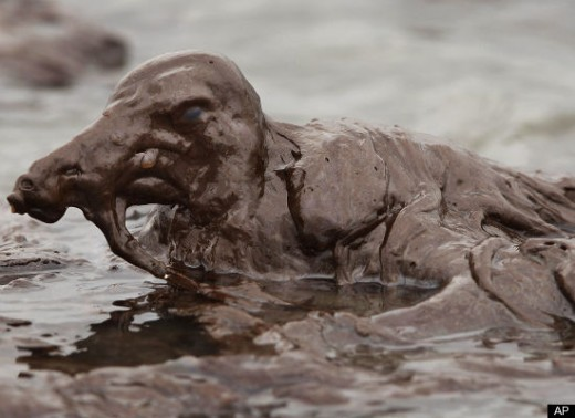 Source: http://www.huffingtonpost.com/2010/05/03/gulf-oil-spill-photos-ani_n_560813.html#s96638