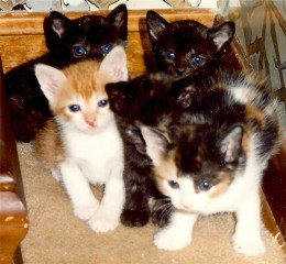 Angie's kittens