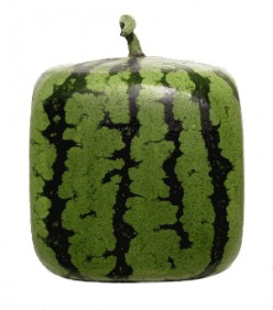 Square Shaped Watermelon