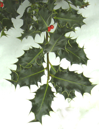A Sprig of Holly May be the Cheapest Christmas Gift for Coworkers Ever...