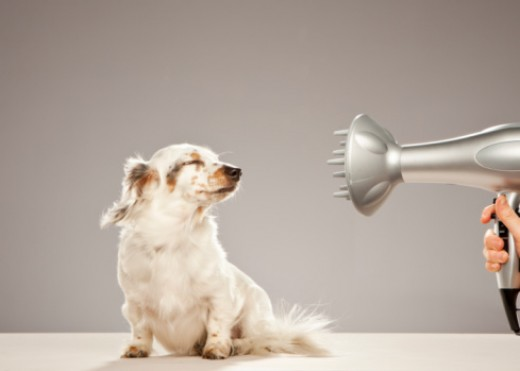 You may be blown away with all that should be considered when grooming your pet