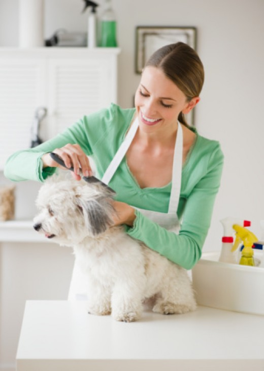 A professional can give you tips on grooming for your pet so that one day, you can groom Rover yourself.