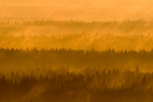 Photo is taken from a mountain looking down over a forest in northern Sweden just before sunset. The golden rays from the sun is caught by the mist and the trees.