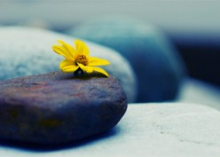 Mindfulness: What Does It Mean To Be Present In Our Daily Lives?