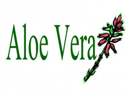 Why Drink Aloe Vera Juice Everyday?