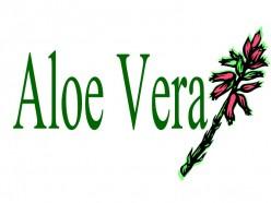 Why Drink Aloe Vera Juice Everyday?