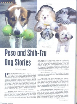 Other article about my Dogs and Shihtzu breed