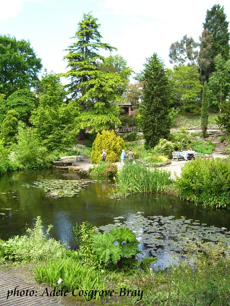 One of Ness Gardens most famous views.