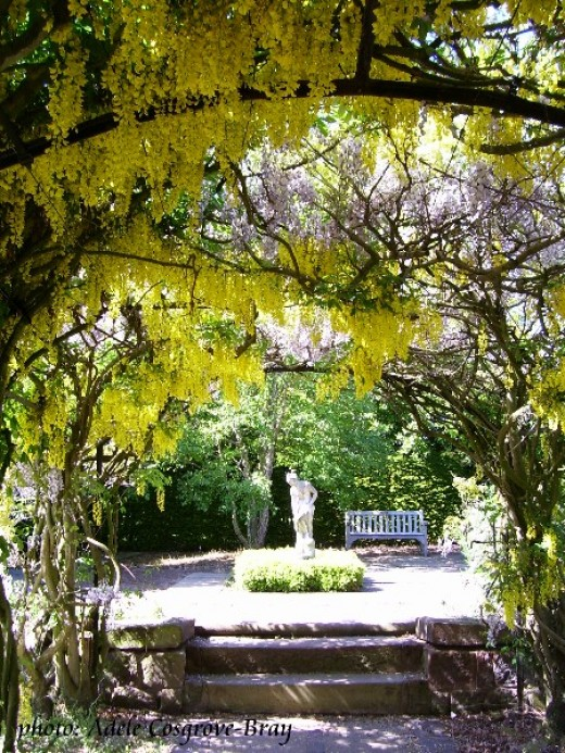 The laburnum and lilac walk is spectacular in spring.