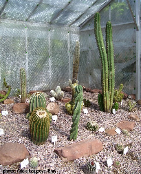 Inside the cactus house at Ness Gardens, Wirral.