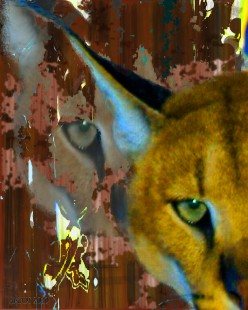 Captive Lynx Big Cat - from snapshot to art image2