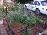 Gardening to law enforcement
