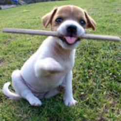 Run little doggie