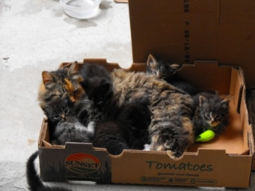 Mother and babies doing just fine.  June 12, 2010..all adopted