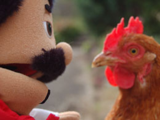 I asked ze chicken questions it did not feel comfortable vith answering. I voz giving it a real grilling.