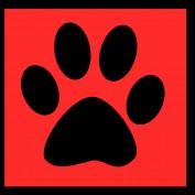 patdmania profile image