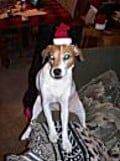"Lucy ""Claus"" At Christmas Last Year-'Travelling outside the box!'"