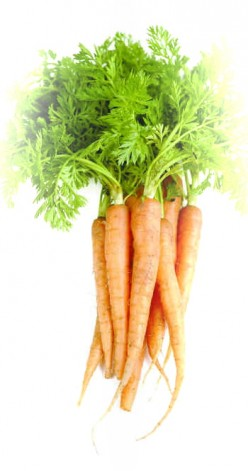 Firm Fresh Carrots