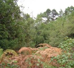 El Tanque woods