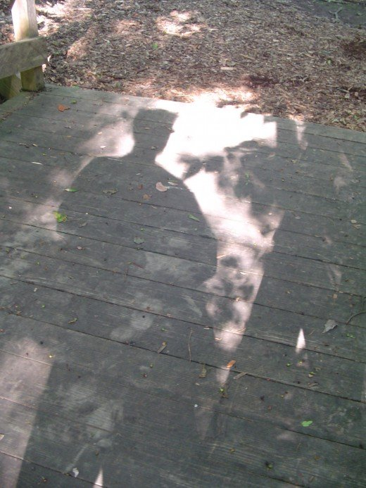 An interesting shadow. What do you see?