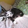 kittyrehab profile image