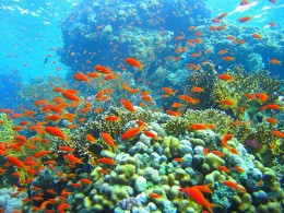 Coral reef photo by Mikhail Rogov via Wikimedia Commons