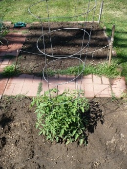 tomato cages will help you control growth